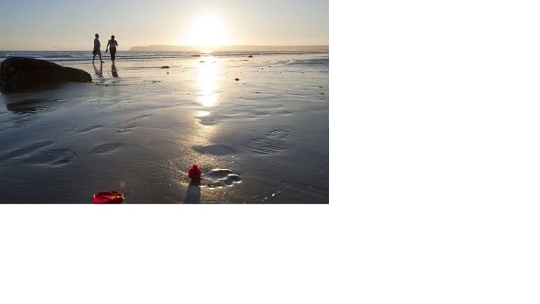 شواطئ كاليفورنيا