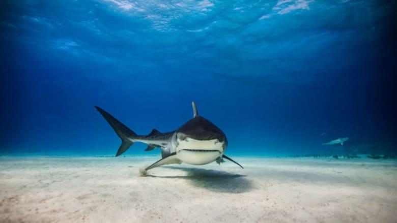 هل سمكة القرش هذه..بطلة سينما هوليوود؟