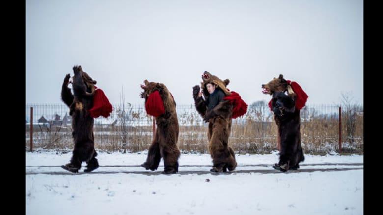 في رومانيا.. الدببة ترقص أيضاً احتفالاً برأس السنة