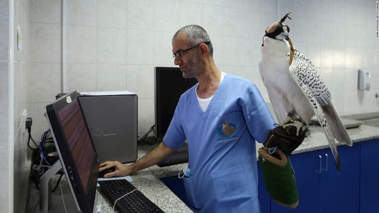 جولة في مستشفى الصقور بأبوظبي