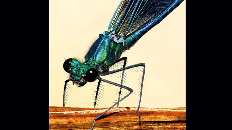 """عالم الحشرات """"السوريالي"""" كما لم تره من قبل"""