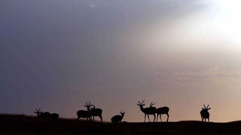 مقاطع فيديو تبين قنص غزلان وطيور على يد لدن أجانب تثير جدلا بالمغرب