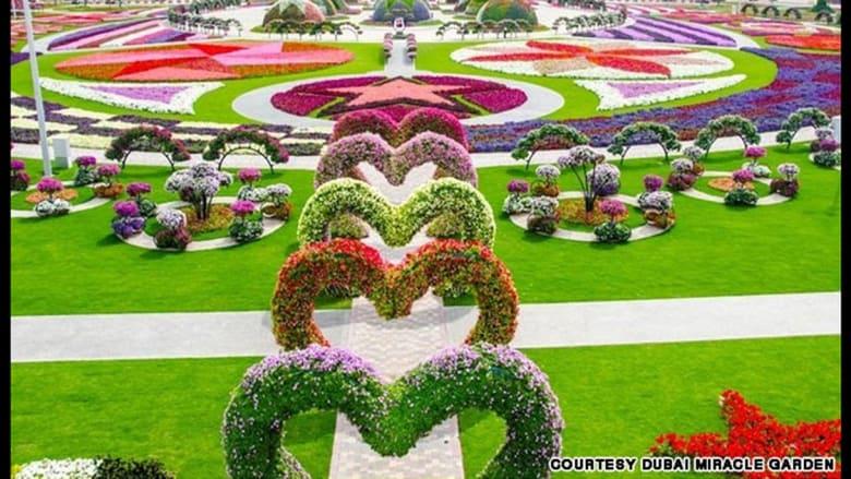 """""""الحديقة المعجزة"""" في دبي تمتد لأكثر من أربعة كيلومترات."""