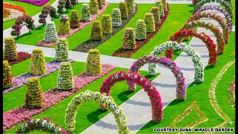 ولا يسمح بانتقاء الأزهار أو قطفها في الحديقة.