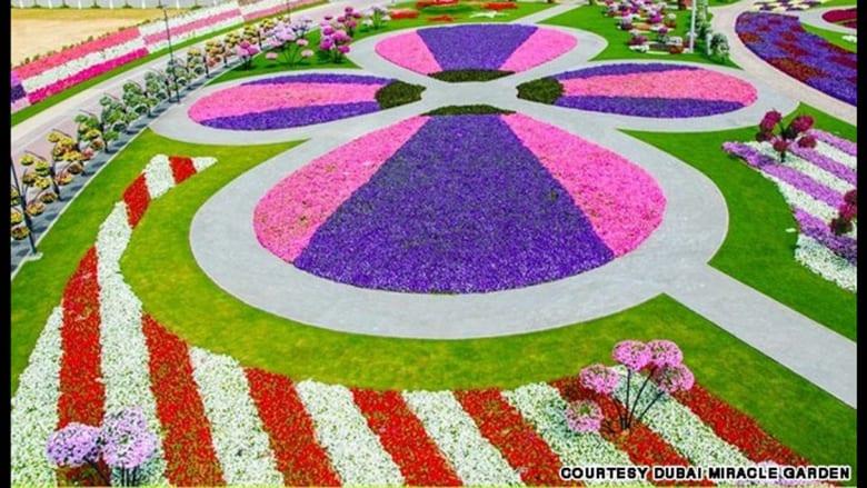 """وفقا للتقارير فإن """"حديقة المعجزة"""" في دبي تهدف إلى تحطيم الرقم القياسي بموسوعة غينيس لأطول جدار زهور في العالم."""
