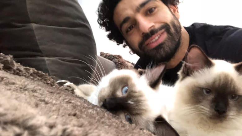 محمد صلاح يغرد عن القطط والكلاب بعد جدل حول تصديرها بمصر