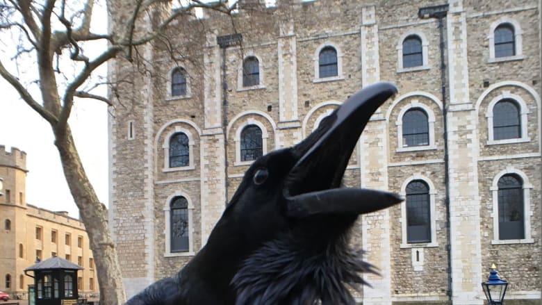 """بأشهر مواقع الإعدام بإنجلترا.. """"ملكة"""" الغربان تختفي من برج لندن"""