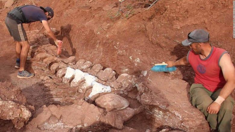 اكتشاف أحافير ديناصورات يمكن أن تنتمي إلى أكبر مخلوق في العالم