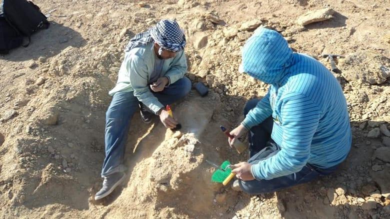 .اكتشاف عظام لأكبر سلحفاء بحرية يرجع تاريخها لأكثر من 70 مليون عام بالصحراء الغربية