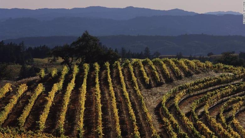 عام كامل بدون إيجار وراتب قدره 10 آلاف دولار..ما الذي تطلبه وظيفة في مصنع للنبيذ بكاليفورنيا؟