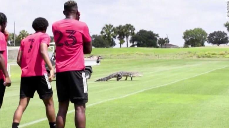 شاهد.. لحظة اقتحام تمساح ضخم ملعب كرة قدم ورد فعل اللاعبين