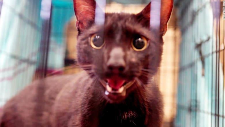 العثور على قطة على قيد الحياة بعد 16 يومًا من انهيار برج سكني في ميامي