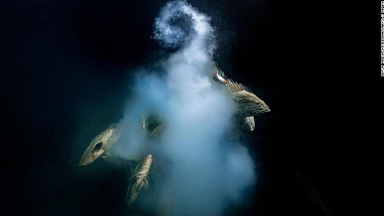 مشهد مذهل تحت الماء يُتوج الفائز بجائزة مصور الحياة البرية لعام 2021