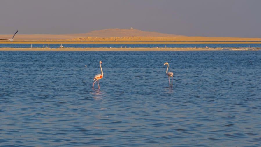 بحيرة قارون في مصر
