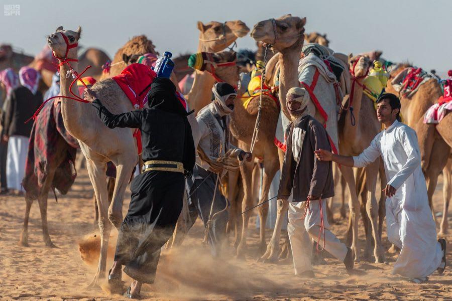 رياضة الهجن في الربع الخالي بالسعودية..من الحروب إلى السباقات