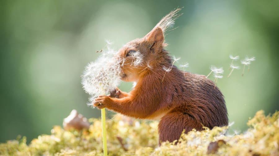حيوانات تتمتع بحس فكاهي عالي.. هذه أبرز اللقطات الطريفة في جائزة كوميديا الحياة البرية للتصوير الفوتوغرافي لعام 2019