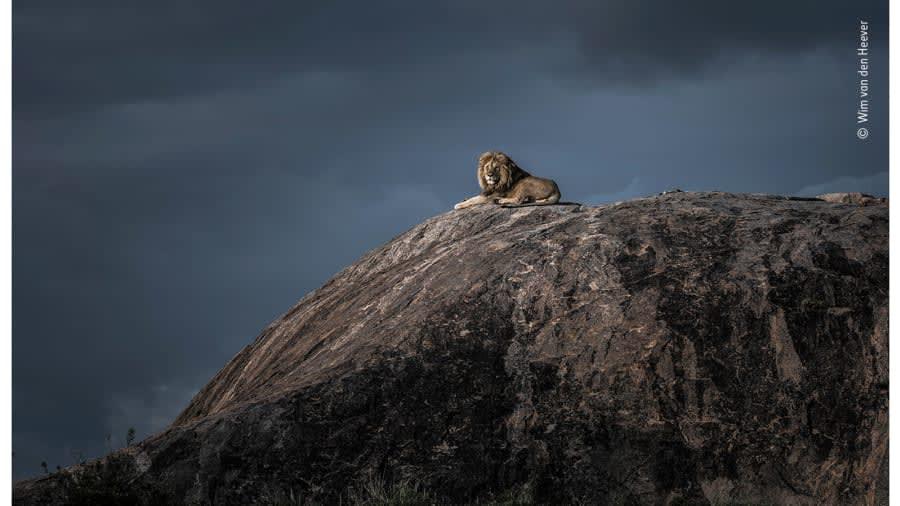 صور مذهلة تتنافس على جائزة مصور الحياة البرية لعام 2020
