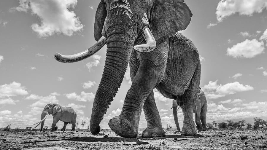 مصور الحياة البرية، كريس فالوز