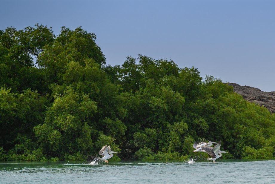 جزر الفرسان.. إدراج أول موقع بالسعودية ضمن محميات المحيط الحيوي