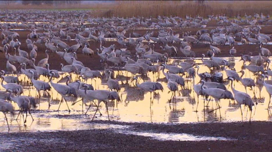 بالفيديو.. بحيرة طبريا..جنة الطيور المهاجرة