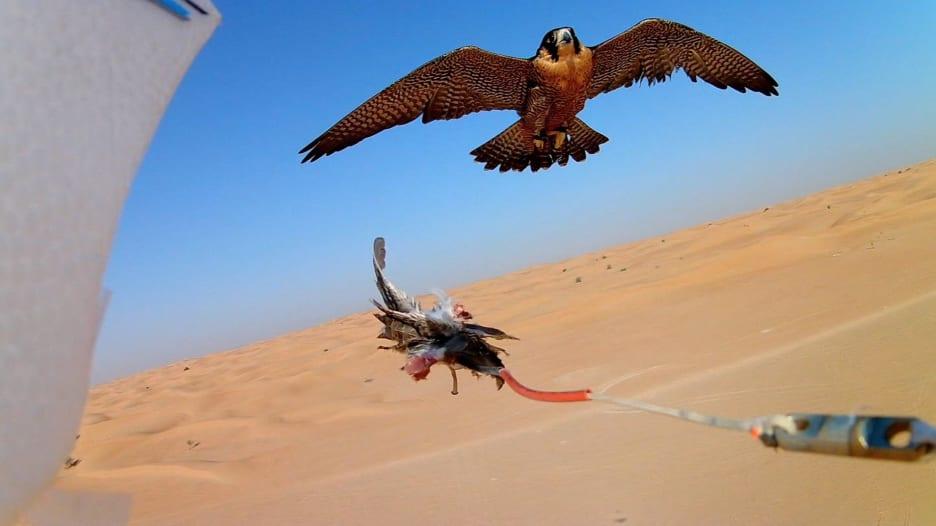 بالفيديو: معركة بين صقر وطائرة بدون طيار في صحراء دبي.. من يفوز في النهاية؟