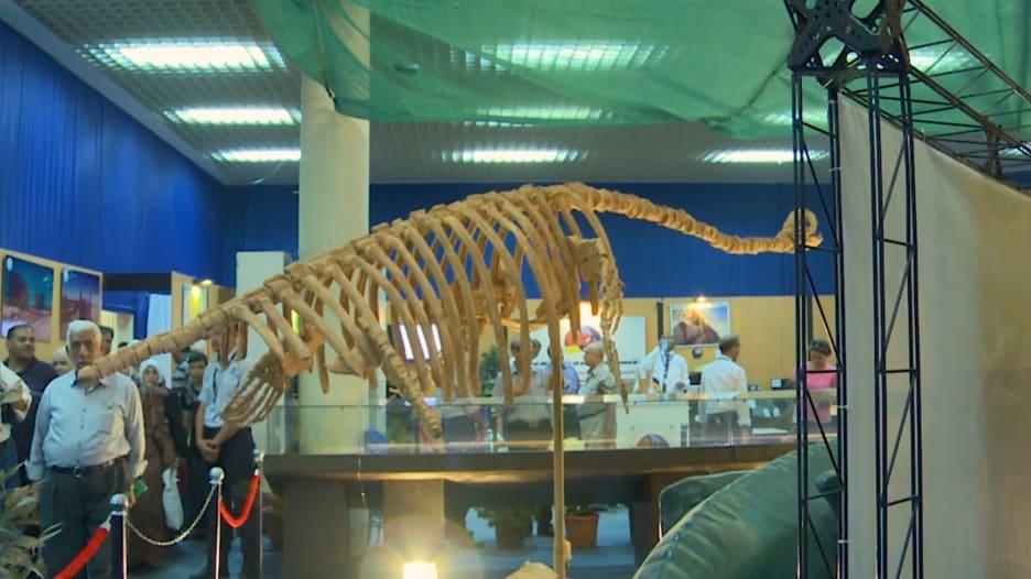 """ماذا تعرفون عن الـ""""بليزوصور""""؟ شاهدوا ما تم اكتشافه في سوريا مؤخراً"""