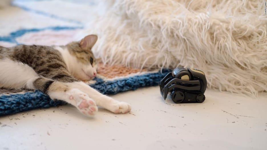 شاهد ما تفعله القطط عند رؤية هذه الروبوتات الصغيرة