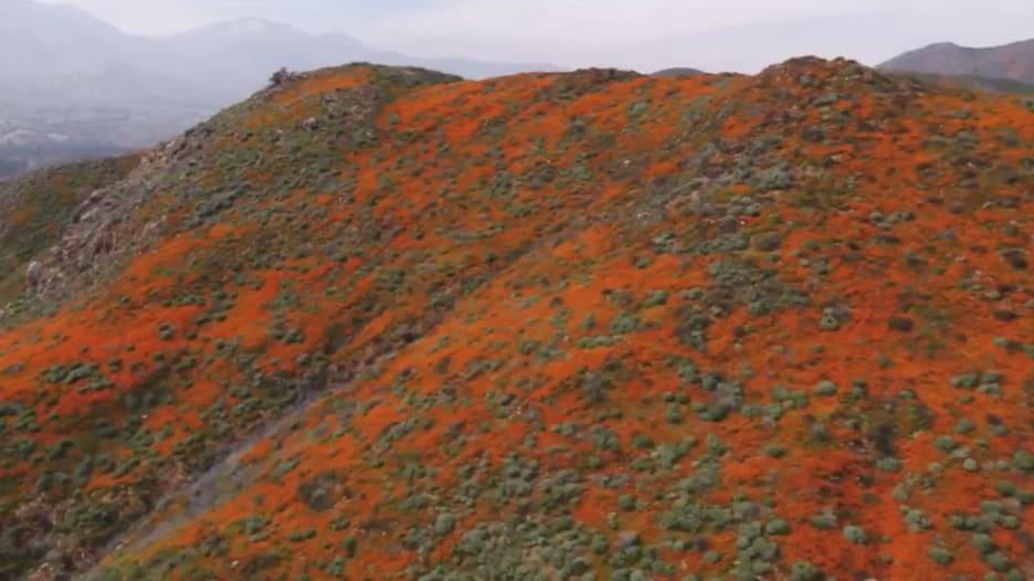 ظاهرة تحول جبال كاليفورنيا الى اللون البرتقالي.. فما هي؟