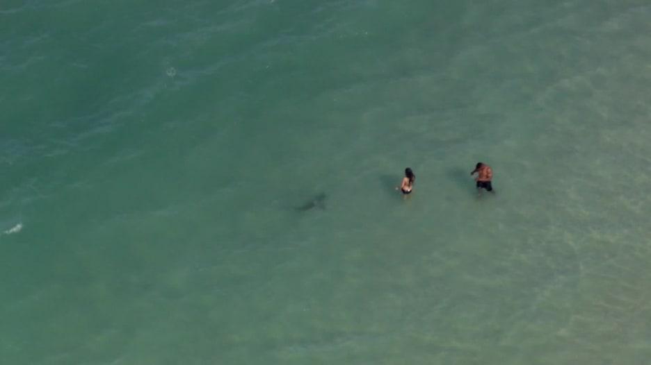 صورة مرعبة ترصد أسماك قرش تسبح حول رواد شاطئ بأمريكا