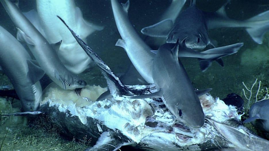 190709124542-01-sharks-south-carolina-0709.jpg