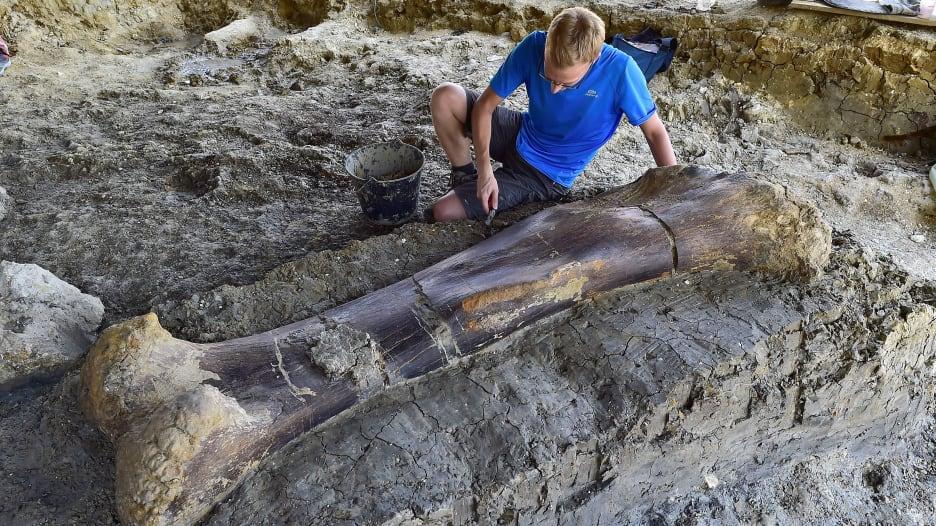 العثور على عظام ديناصور ضخم بفرنسا يبلغ عمرها 140 مليون عام