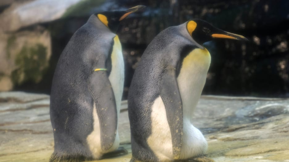 حديقة حيوانات برلين: بطريقان مثليان جنسيا يتبنيان بيضة!