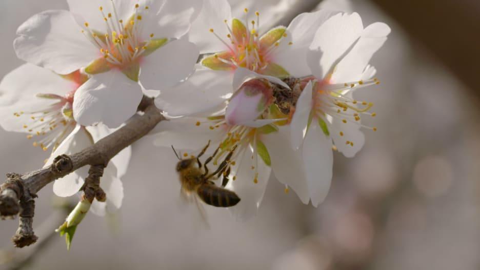 شركة ناشئة تعمل على جعل النحل أكثر ذكاء.. ما سرها؟
