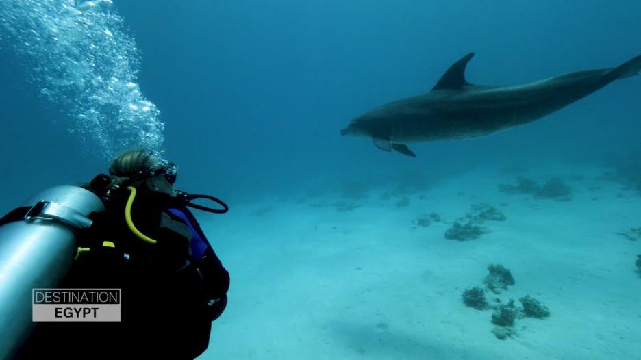 السباحة مع الدلافين في الجونة.. تجربة مفيدة وفريدة من نوعها