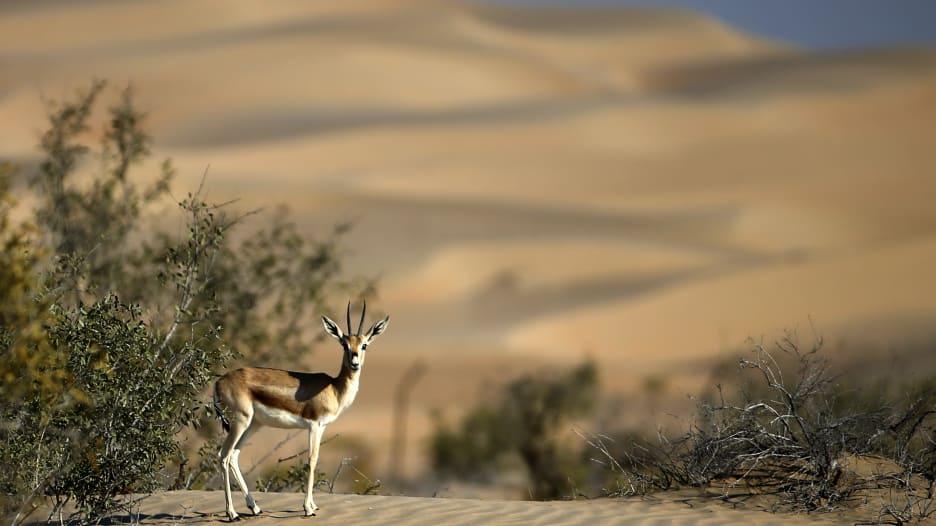 أبوظبي في فصل الشتاء.. إليك 4 نشاطات وسط الطبيعة