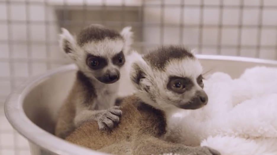 إليك ما فاتك عندما كانت حدائق الحيوانات مغلقة بسبب فيروس كورونا