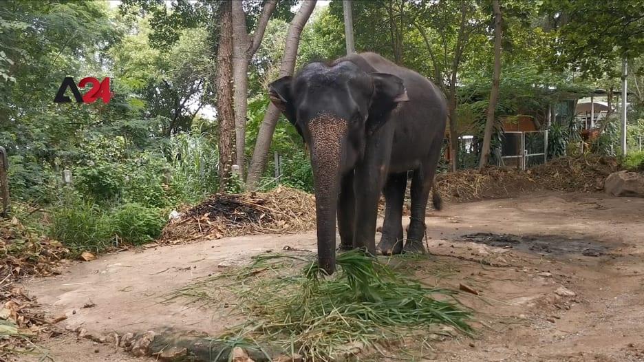 بسبب كورونا.. قرى الفيلة الجاذبة للسياح بتايلاند تصبح فارغة