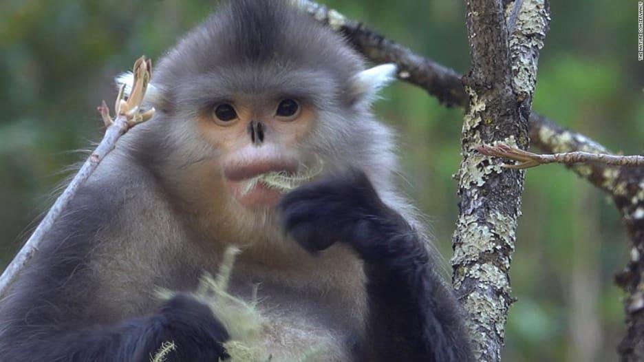 210203231229-cte-golden-monkey-intl-spc-hnk-super-169.jpg