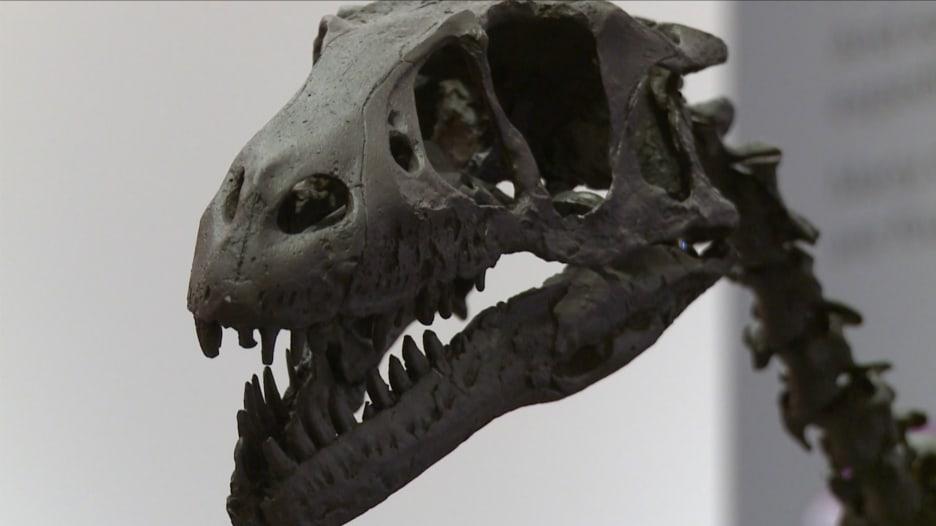 هل عاش تيرانوصور بأبرد مكان بوجه الأرض؟ علماء يثبتون عيش الديناصورات بالقطب الشمالي