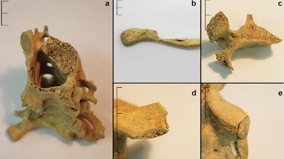 اكتشاف آثار لمذبحة تعود للعصر الحديدي
