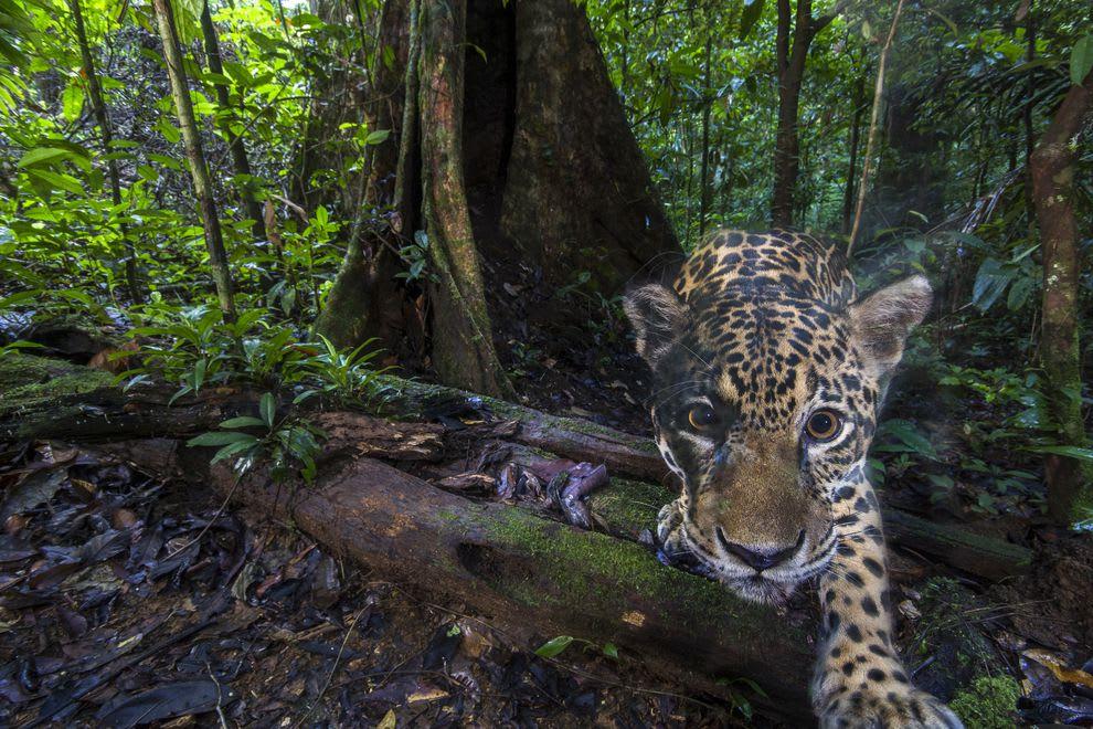 لقطات عفوية لحيوانات البرية