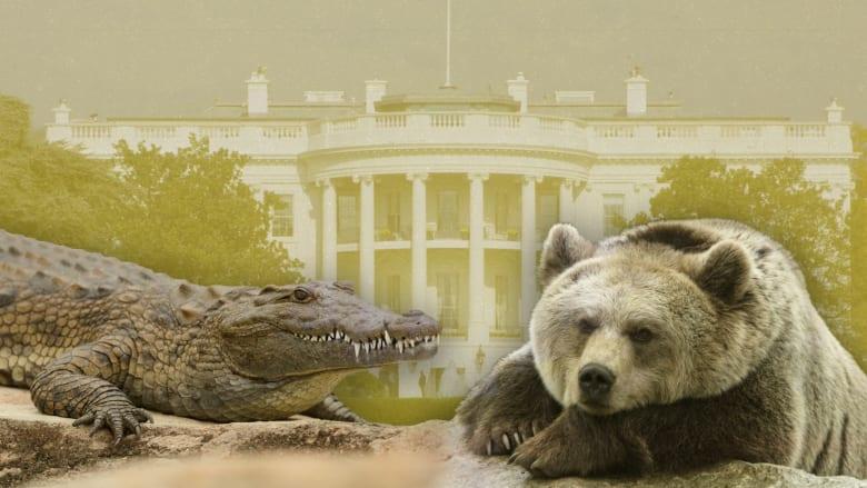 أغرب الحيوانات التي اصطحبها رؤساء أمريكا للبيت الأبيض