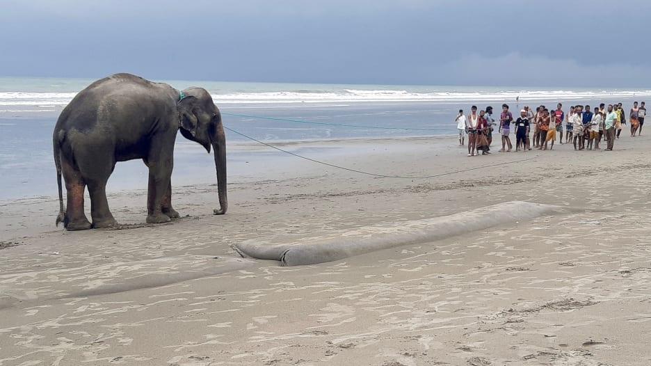 عبرا الحدود بين ميانمار وبنغلاديش.. شاهد إنقاذ اثنين من الفيلة بعد رحلة مليئة بالعذاب