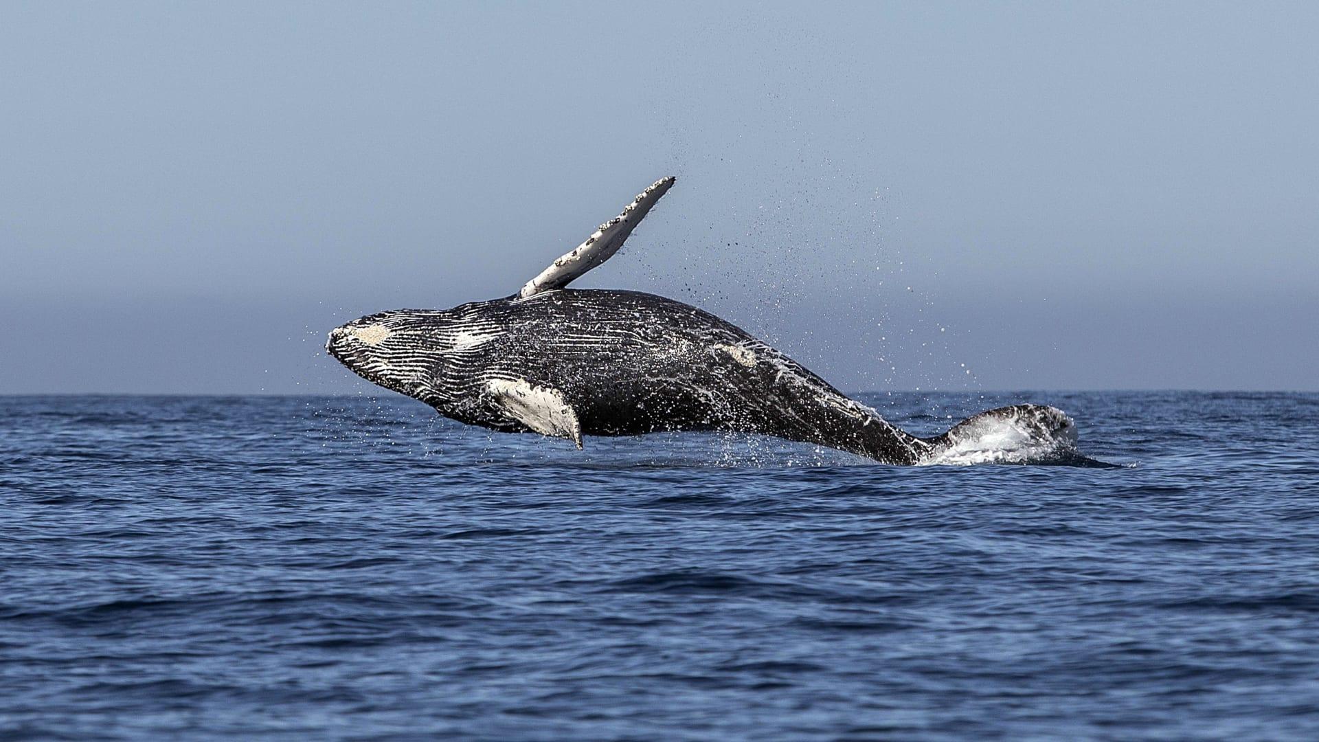 حل لغز قد يفسر كيفية انتقال عيش الحيتان من اليابسة إلى البحر