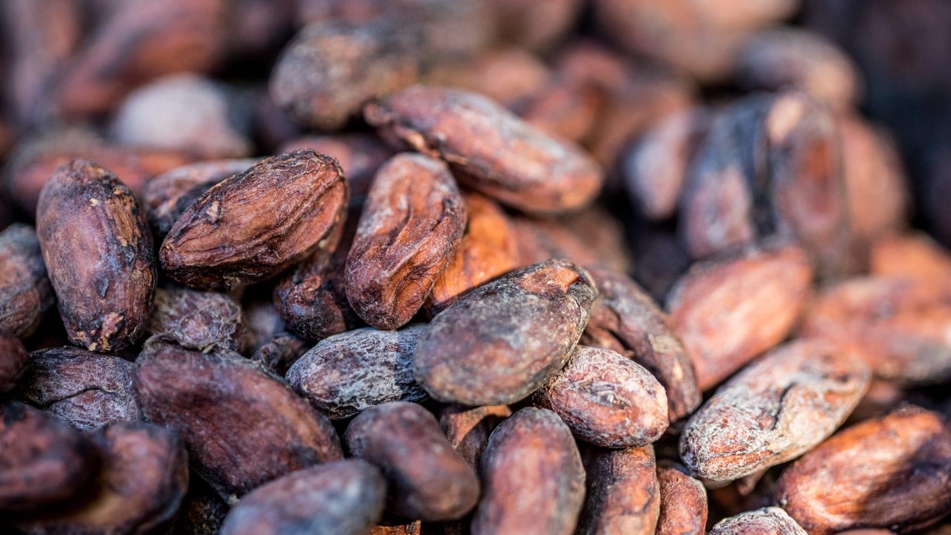 """""""مركز الكاكاو"""".. هذه خطط دبي لتصبح مركزاً عالمياً لتجارة حبوب الكاكاو"""