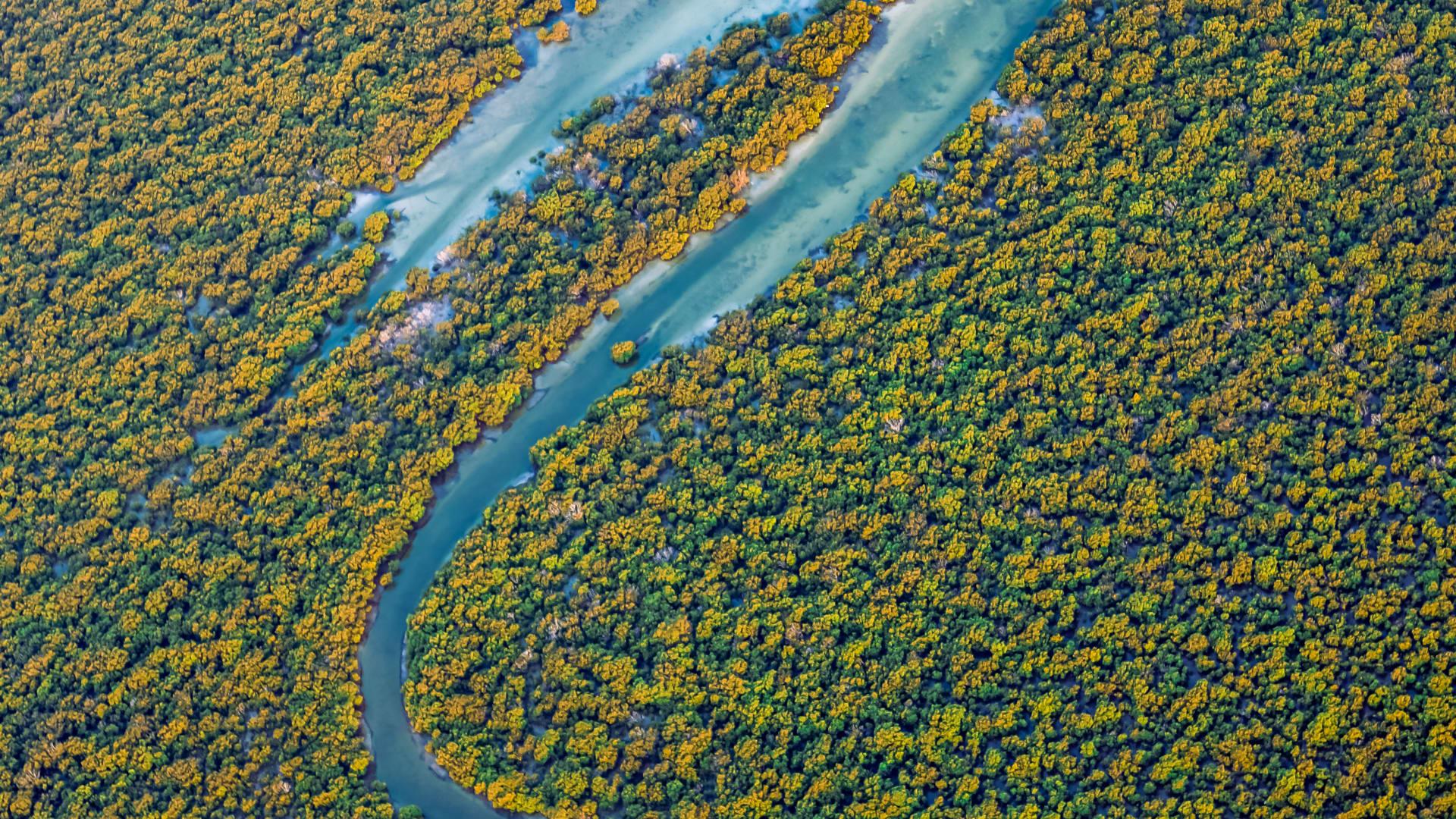 مصورة توثق مشاهد جوية حالمة لأشجار القرم الزاهية في الذخيرة بقطر