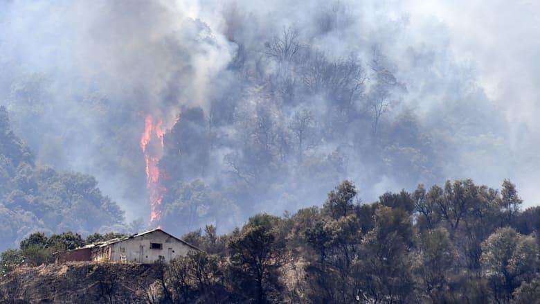 الجزائر تكافح النيران.. وعلماء يحذرون من تحول منطقة البحر المتوسط إلى بؤرة حرائق غابات